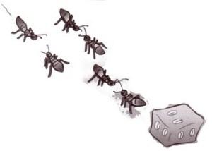 Ilustrasi bentuk komunikasi semut
